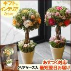 キャンディトピアリー(L) 誕生日プレゼント 御祝い 花 ドライフラワー トピアリー 開店祝い 新築祝い