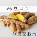 ショッピング琉球 無農薬の春ウコン(生) 5キロ 沖縄県宮古島から直送で全国送料無料