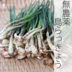 無農薬栽培 島らっきょう(土付き) 1kg 宮古島産