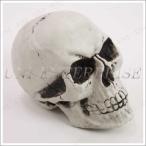 Uniton しゃれこうべ(頭蓋骨) 飾り 装飾 パーティーグッズ 怖い スカル ガイコツ ドクロ 骸骨 スケルトン ハロウィングッズ デコレーション