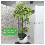 ・Funderful 人工観葉植物 光触媒 パキラ 160cm フェイクグリーン インテリアグリーン 消臭 抗菌