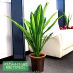 人工観葉植物 光触媒 ドラセナ 白斑 90cm 造花 お祝い 贈り物 プレゼント ギフト 室内インテリア 幸福の木 フェイクグリーン インテリアグリー