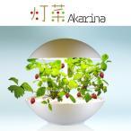 LED水耕栽培 植物育成器 灯菜(アカリーナ) 野菜 ハーブ お花 オリンピア照明 OMA01RN0J