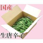 国産 生 青唐辛子 辛口 500g 生鮮品 千葉県産