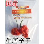 国産 激辛生唐辛子 キャロライナ・リーパー 10g 生鮮品 千葉県産