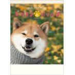 2019年カレンダー  柴犬まるとおさんぽカレンダー 壁掛けカレンダー 犬カレンダー どうぶつカレンダー