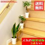 お試し価格 観葉植物 3点セット 簡単 おしゃれ 卓上サイズ ガジュマル パキラ サンスベリア 人気の品種セット 送料無料 育てやすい観葉植物 即日出荷