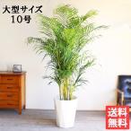 送料無料 アレカヤシ ヤシの木 大サイズ 大鉢 10号鉢 観葉植物 ヤシ 大型
