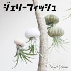 ジェリーフィッシュ エアプランツ ウニの骨 ワイヤー付 吊り下げ ハンギング チランジア airplants 観葉植物 インテリア