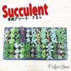多肉植物 72個入り 24種類 アソートセット ミニ鉢植え 送料無料