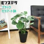 モンステラ ブラックセラアート鉢植え 送料無料 観葉植物 中型 インテリア おしゃれ