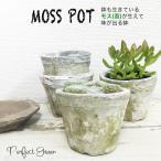 モスポット ホワイト3鉢 植木鉢 陶器鉢 テラコッタ鉢 素焼き鉢 鉢底穴アキ プランター おしゃれな植木鉢 mossポット 即日出荷