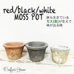 モスポット 3色から選べる5鉢 植木鉢 陶器鉢 テラコッタ鉢 素焼き鉢 鉢底穴アキ プランター おしゃれな植木鉢 mossポット
