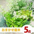 庭づくり おまかせ5点セット 季節の庭木 目隠し