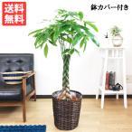 パキラ 鉢カバー付 観葉植物 送料無料 中型 大型サイズ