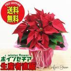 ポインセチア 花 鉢植え 選べる鉢カバー ラッピング 鉢 クリスマス 送料無料  誕生日 お祝い プレゼント フラワー 花 冬 フラワーギフト 即日出荷