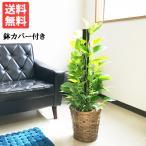 育てやすい観葉植物 第1位!