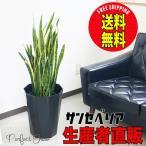 空気清浄で話題の観葉植物です