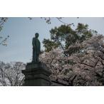 千鳥ヶ淵・銅像・桜ポストカード