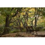 日比谷公園のベンチポストカード