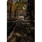 日比谷公園の道ポストカード