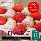 産地直送完熟いちご 紅白いちご 贈答用 総量400g