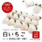 産地直送完熟いちご 白いちご 贈答用 総量約400g 12粒〜18粒