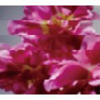 (おまけ付)何度でも新しく生まれる / MONDO GROSSO モンド・グロッソ (CD+DVD) CTCR-40387-SK