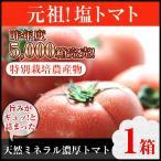 (わけ有り)丸かじり塩トマト 1箱 (熊本県産)(リコピン)
