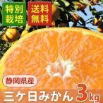 みかん 三ケ日 訳あり 3kg 三ヶ日みかん 送料無料 静岡県産 特別栽培  蜜柑