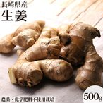 生姜 しょうが 500g 長崎産 無農薬 無農薬栽培