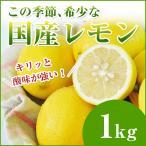 レモンが希少なこの時期に!  国産レモン 1kg(檸檬)(人参ジュース)