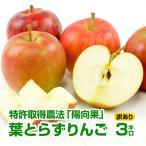 りんご 青森県産 リンゴ 3kg 葉とらずりんご 訳あり B品 家庭用 成田りんご園 グルメ