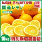 レモン 国産レモン 佐賀県産 10kg 特別栽培農産物 訳あり