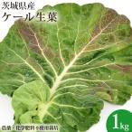 無農薬 ケール 1kg 国産 無農薬栽培 生葉 青汁