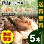 静岡県産 竹の子 5本 送料無料 たけのこ タケノコ  筍