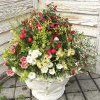 おまかせアレンジ季節のお花の寄せ植えB / ギャザリング寄せ植え / お祝い / お誕生日 / プレゼント / ギフト