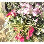 冬のお花のおまかせアレンジ季節のお花の寄せ植えwi05/アイアンかごタイプ/ギャザリング寄せ植え/お祝い/お誕生日/プレゼント/ギフト