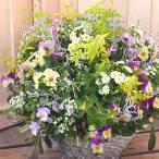 まるい形の寄せ植え冬のお花の寄せ植えwi02/ギャザリング寄せ植え/お祝い/お誕生日/プレゼント/ギフト