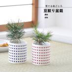聖新陶芸 GD-889 豆絞り盆栽栽培セット (黒松または赤松)