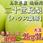 二十世紀梨 鳥取県 ハウス二十世紀梨 20世紀梨 東郷 2kg 3L(6玉)大玉 ハウス栽培 贈答 進物 果物 お取り寄せ