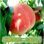 桃・山梨県産・特秀品・2Kg・もも・モモ(5〜8玉入り)