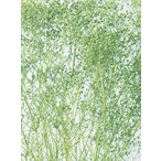 大地農園 ソフトミニカスミ草 ヘッド 7g ヴェールグリーン 00013-751