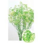 【プリザーブドフラワー・プリザーブド 花材】 1束 約22g 約40cm  *自然の生花や植物を原料...