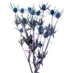 1束 (約35g) 約30-40mL  *自然の生花や植物を原料としています。 サイズ、色、形などは...
