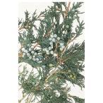 【プリザーブドフラワー・プリザーブド 花材】 1束(約190g) 約45-60cmL  *自然の生花...