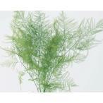 1束(約5本) 約25-30cmL 防虫加工  *自然の生花や植物を原料としています。 サイズ、色、...