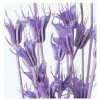 1束 約30g 約53cm 防虫加工  *自然の生花や植物を原料としています。 サイズ、色、形などは...