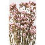 Yahoo!花材問屋Blossomブライダルピンク・SAデージー・ドライフラワー・大地農園