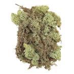【プリザーブドフラワー・プリザーブド 花材】 1袋(40g)  *自然の生花や植物を原料としています...